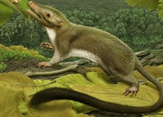 International experts have identified the creature that gave rise to all the placental mammals