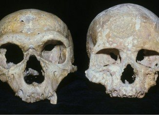 A new study of Neanderthal skulls suggests that they became extinct because they had larger eyes than our species