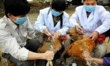 China is increasing efforts to contain the spread of a new strain of bird flu which has killed six people in the country