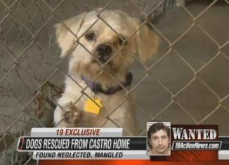 Ariel Castro's dogs could have served as pets for his three captives and were apparently in better condition than the women he imprisoned