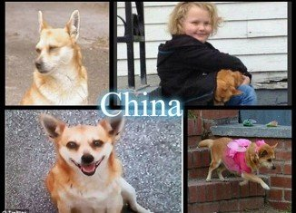 Honey Boo Boo and her late dog China