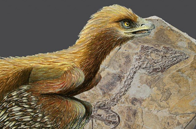 The fossil animal, which retains impressions of feathers, is dated to be about 160 million years old