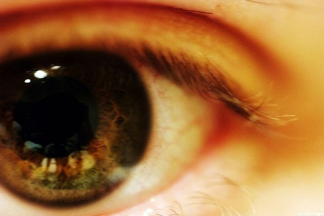 An animal study in the journal Nature Biotechnology showed the part of the eye which actually detects light can be repaired using stem cells