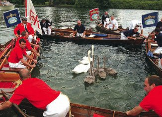 Swan Upping is the annual census of the swan population on stretches of the Thames