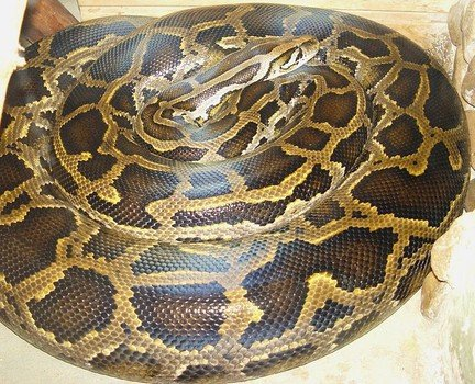 Forty distressed pythons have been rescued by animal welfare officers from plastic storage bins in a Canadian motel room photo