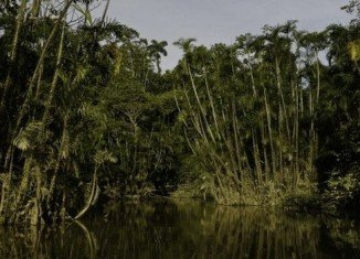The Ecuadorian conservation plan that would have paid the country not to drill for oil in previously untouched parts of Yasuni National Park in the Amazon rainforest has been abandoned