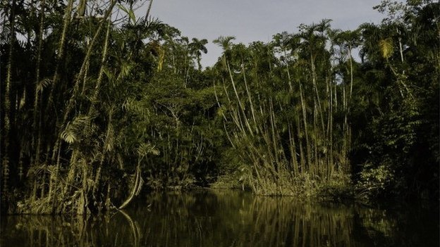 The Ecuadorian conservation plan that would have paid the country not to drill for oil in previously untouched parts of Yasuni National Park in the Amazon rainforest has been abandoned photo