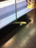 The shark, about 4 ft long, was found under a row of seats on a Queens-bound train