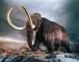 Climate change, rather than hunting, was the main factor that drove the woolly mammoth to extinction