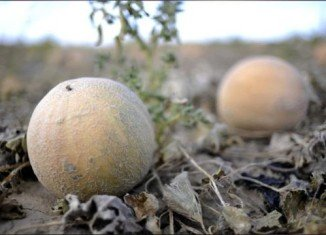 Eric and Ryan Jensen, owners of the Colorado cantaloupe farm linked to a 2011 food poisoning outbreak which killed 33 people and sickened 147, have been arrested and charged with selling contaminated food