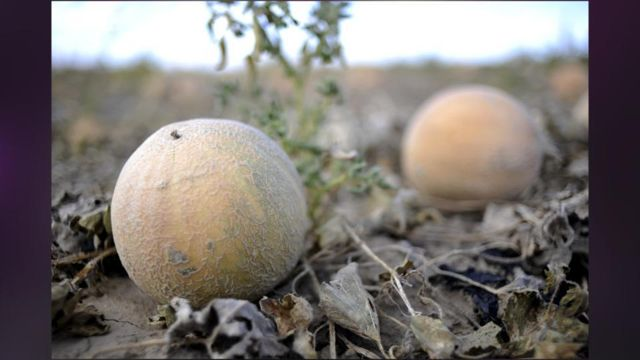 Eric and Ryan Jensen owners of the Colorado cantaloupe farm linked to a 2011 food poisoning outbreak which killed 33 people and sickened 147 have been arrested and charged with selling contaminated food photo