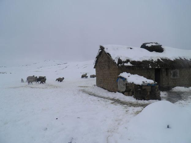 Tens of thousands of animals have frozen to death in Peru over the past week