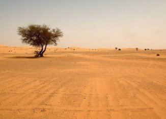 About 80,000 migrants cross the Sahara desert through Niger