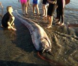 The 14ft dead oarfish was found in the city of Oceanside
