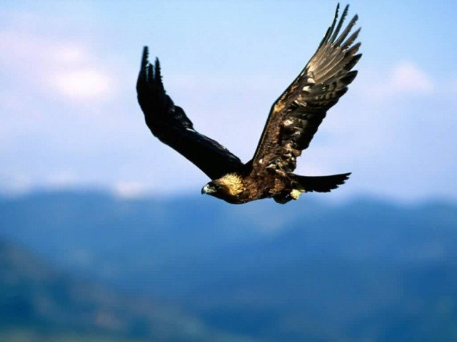 Duke Energy Renewables has agreed to pay out 1 million over the deaths of golden eagles at two wind farms 640x480 photo