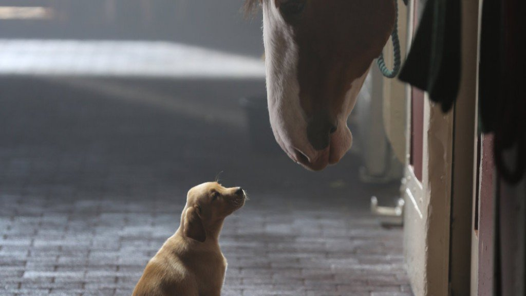 puppy love super bowl commerical