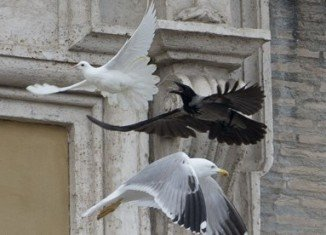 Two white doves released by Pope Francis and two children in Vatican City as a peace gesture have been attacked by a seagull and a crow