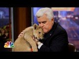 Jay Leno welcomed animal expert Dave Salmoni and his lions on Friday night