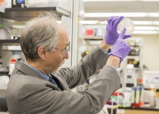 Dr. Jef Boeke of the Langone Medical Centre at New York University described the achievement as moving the needle in synthetic biology from theory to reality