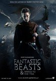 Harry Potter spin-off Fantastic Beasts and Where to Find Them is to be made into a film trilogy