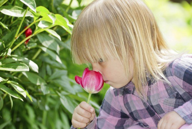 Human nose can detect one trillion different odors, far more than we previously thought