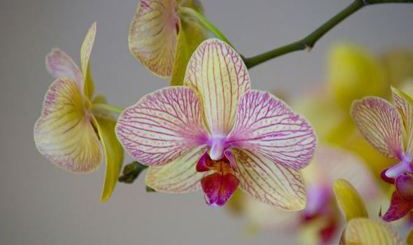 Orchids are beautiful, vibrant and popular flowers