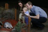 Prince George has met Bilby George at Taronga Zoo in Sydney during his first official engagement in Australia