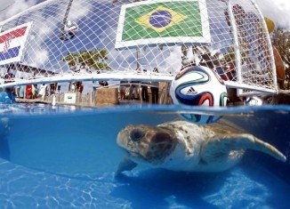 For the World Cup 2014, host country Brazil has chosen a sea turtle, named Big Head, as its oracle