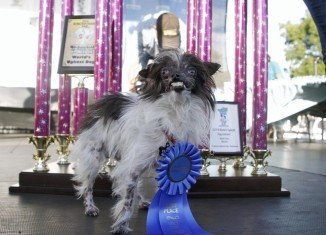 Peanut has been crowned the World's Ugliest Dog at a contest for freakish-looking pets in California