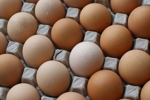 Quality Egg LLC has agreed to pay $6.8 million in fines for selling old eggs with false labels and the tainted products that caused a nationwide salmonella outbreak in 2010