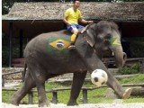 Thailand's football match with elephants representing World Cup nations