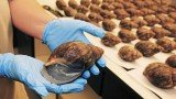 Customs agents have seized 67 live giant African snails at Los Angeles International Airport