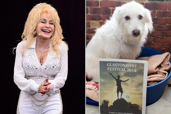 Dolly Parton has announced she wants to adopt a dog that was left behind following the exodus of Glastonbury Festival 2014