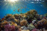 Many of the Caribbean's coral reefs could vanish in the next 20 years