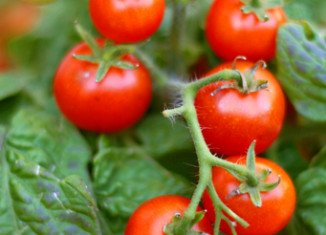 Eating tomatoes may lower the risk of prostate cancer