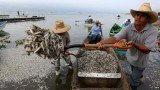 Hundreds of thousands of fish have been washed up on the shores of Lake Cajititlan in Jalisco over the past week