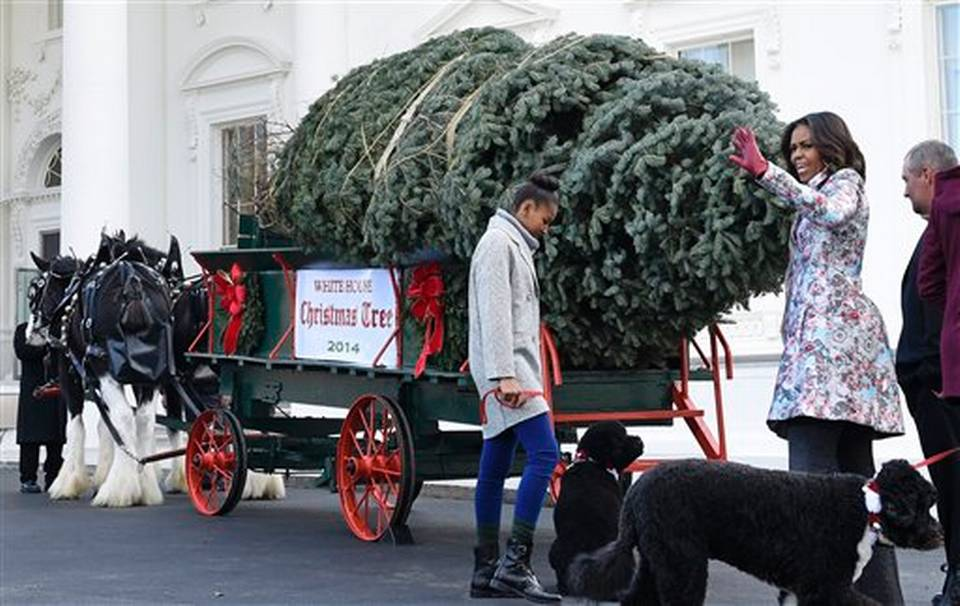 2014 White House Christmas Tree Welcomed By Michelle Obama