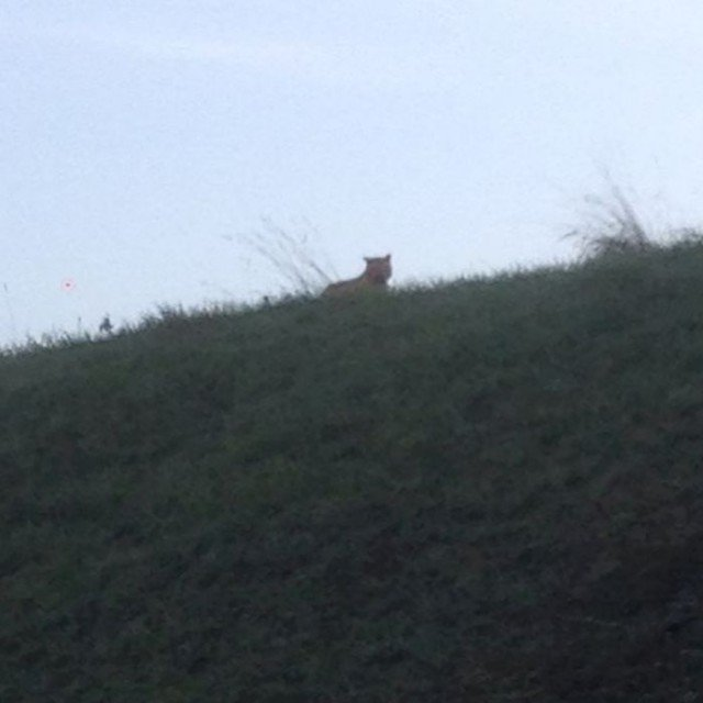 Police and firefighters are desperately hunting for a tiger on the loose near Paris