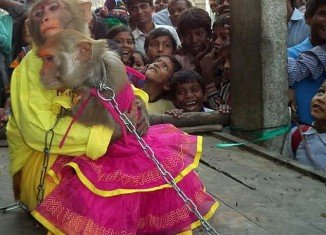 Ramu and his bride, a female monkey called Ramdulari