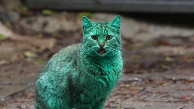 Bulgaria green cat