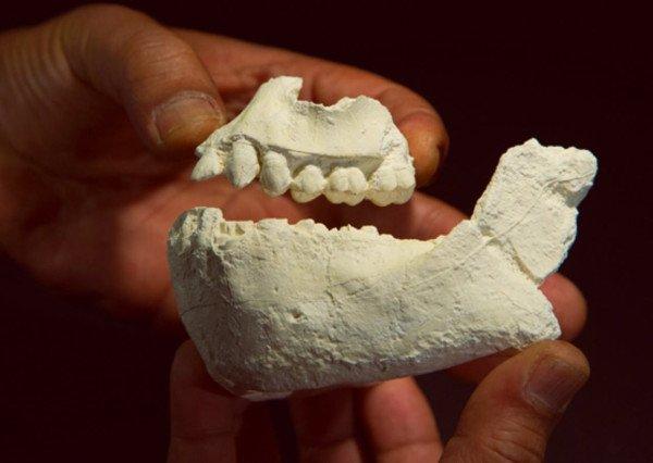 Australopithecus deyiremeda discovered in Ethiopia