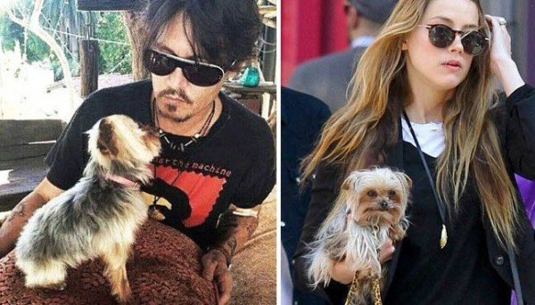 Johnny Depp and Amber Heard dogs