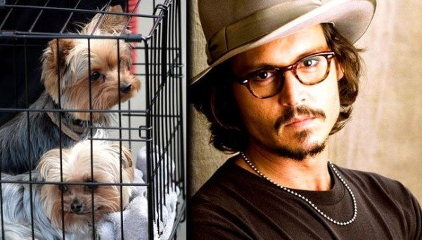 Johnny Depp dogs leave Australia