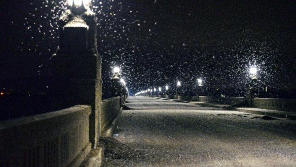 Mayfly swarm closes Pennsylvania bridge