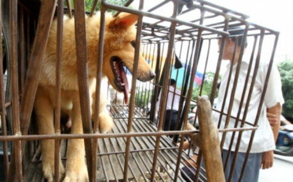 Yulin Dog Meat Festival 2015