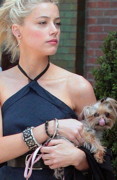 Amber Heard dogs Australia