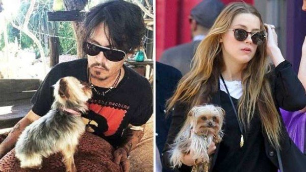 Johnny Depp and Amber Heard dog scandal