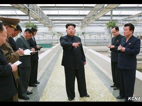 Kim Jong un terrapin farm execution