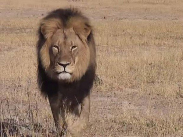 Cecil the lion hunter in court