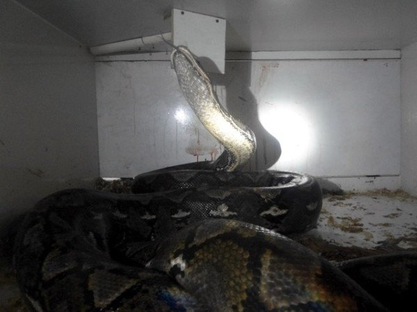Kentucky python attacks pet store owner